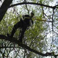George's Tree Service can add beauty to your landscaping by pruning and trimming your trees.