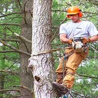 George's Tree Service can safe remove trees from your property.